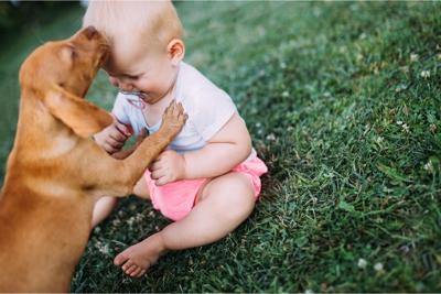Prihod novorojenčka v domovanje psa ter nega psa